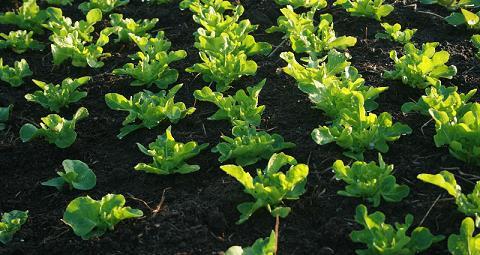 Gardening methods - Olive garden interview questions ...